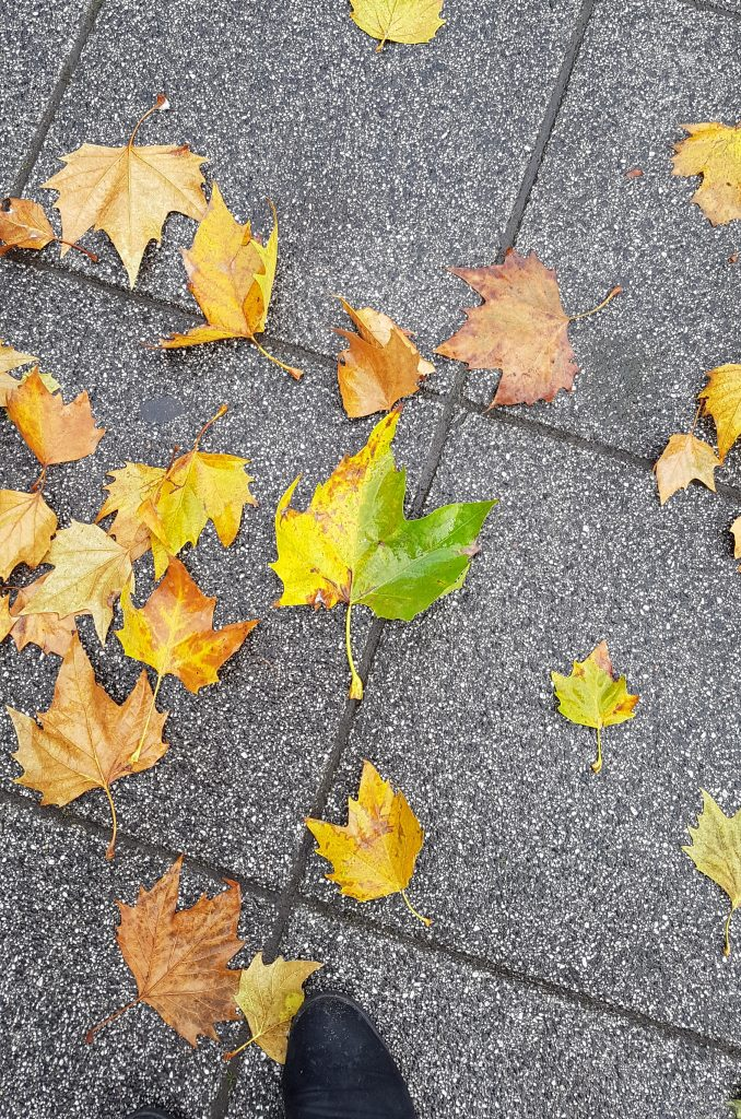 Non-stop Noor: November & December in pictures - Fall leaves